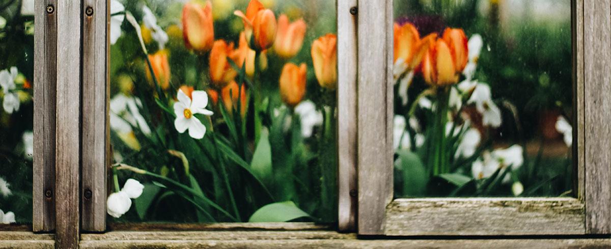 Gardening Tips October