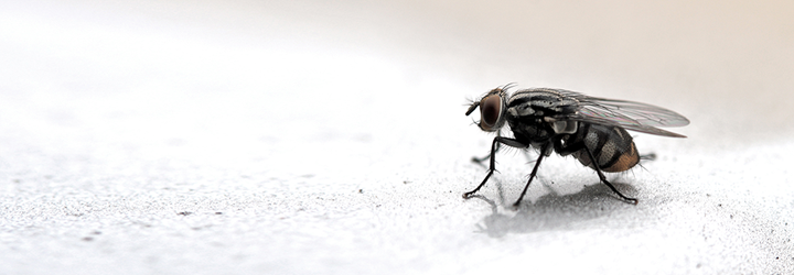 Keeping bugs out of your home