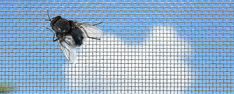 Insect mesh on window